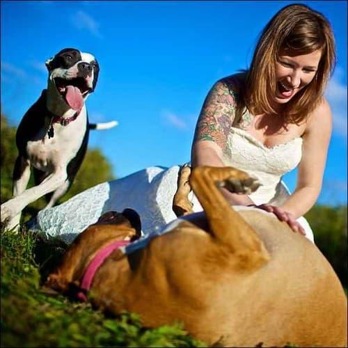 matrimonio cagliari foto sposa con cani